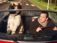 Юбер и собака