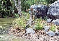 Охотник на крокодилов: схватка